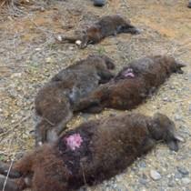 犬に襲われたとみられる4匹のクロウサギ(提供写真)