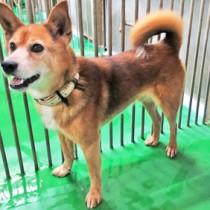 保健所で捕獲、保護され譲渡を待つ犬(資料写真)