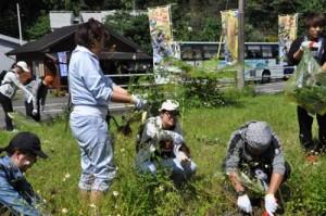 根や茎を残さないよう外来植物を取り除く学生ら=4日、奄美市住用町