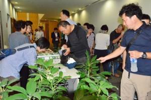 さまざまな品種のアボカド苗や栽培指導書、栽培資材の販売もあったサミット会場=17日、鹿児島市