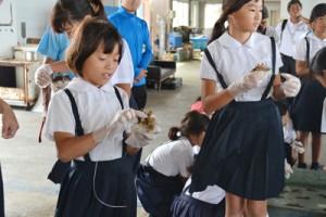 針金を使い、サンゴの苗を専用のブロックに取り付ける児童=12日、与論町