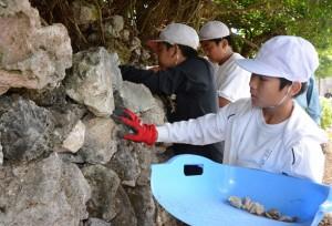 サンゴ石灰岩などで石垣を積む早町小5年生ら=12日、喜界町塩道