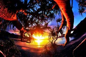 吉行さん全国総合写真展で大賞受賞・「輝きの刻」(提供写真)