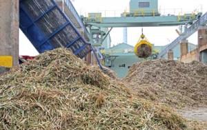 製糖シーズンが始まり工場に搬入されたサトウキビ=19日、伊仙町伊仙