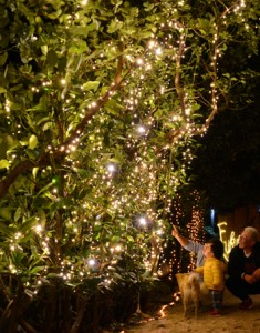 フクギ並木を彩る「ふくぎナイト」=26日、大和村国直