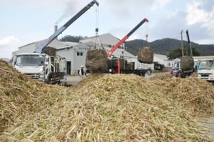 富国製糖への搬入が始まった2019年産の原料サトウキビ=16日、奄美市笠利町
