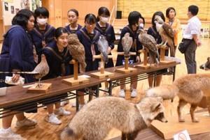 展示された動物の剥製を鑑賞する生徒ら=12日、天城町天城