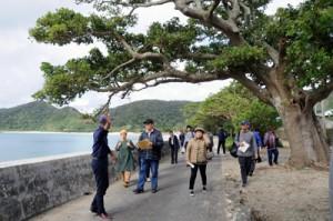 諸鈍デイゴ並木を見学するツアー参加者ら=1日、瀬戸内町加計呂麻島