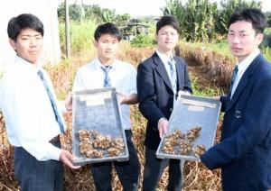 露地での黒ウコン実証栽培を行った徳之島高校総合学科生物生産系列の生徒と、収穫した