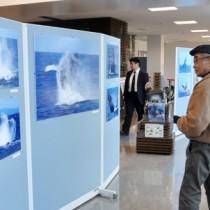 奄美空港で開催されている興さんの写真展=29日、奄美市笠利町