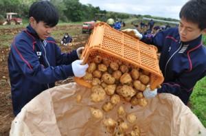 バレイショの収穫作業に励む生徒=18日、知名
