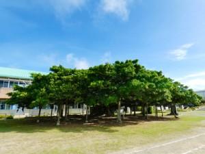 山崎さんの作品「朝日に輝く大樹」(鹿児島県提供)