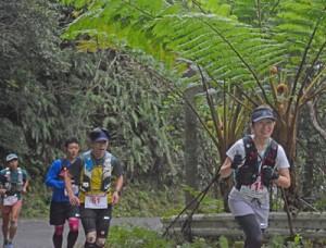 自然を楽しみながら山道を駆ける50㌔コース出場者=9日、宇検村