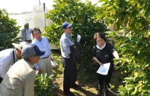 東さん(右)から沖永良部島でのコーヒー栽培について話を聞く商業部会のメンバーら=21日、和泊町