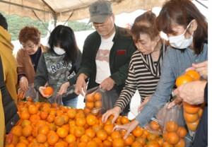 買い物客の人気を集めたタンカン詰め放題=16日、奄美市住用町の「三太郎の里」