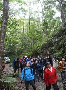 世界自然遺産推薦地を散策し、身近に残る自然に触れる参加者=9日、徳之島中部の剥岳林道