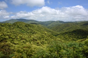 希少な動植物が生息・生育する照葉樹の森=奄美大島