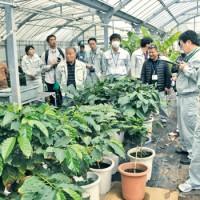 コーヒー農園を視察する関係者=20日、奄美市笠利町