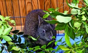 公開された「ケンタ」=24日、鹿児島市の平川動物公園