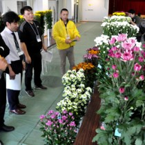 出展された地場産の切り花、5部門計105点を審査した品評会=12日、和泊町のやすらぎ館