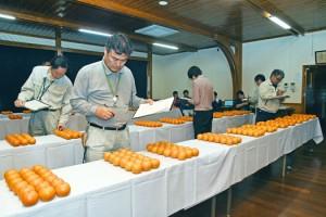 出品されたタンカンの外観を評価する審査員=13日、奄美市名瀬の市農業研究センター
