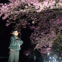 秋名集落で見ごろを迎えたヒカンザクラの夜桜を見上げる山田祥浩さん=2日、龍郷町秋名