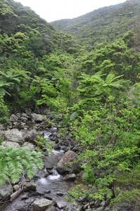 豊かな生態系を育む亜熱帯照葉樹の森=奄美大島