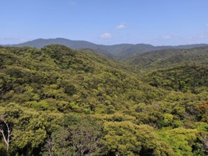 新緑が彩る照葉樹の森=20日、奄美大島