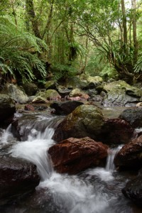 多様な生き物が宿る照葉樹の森。生命の源となる水が巡る=奄美大島