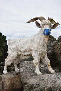マスクを着けて道行く人々を励ます山羊=24日、奄美市名瀬のた山羊島ホテル入り口