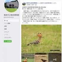 奄美博物館がSNSを利用して始めた「おうちで博物館」(フェイスブック)
