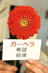 各事業所に贈られたガーベラ=26日、奄美市名瀬のH.O.PROJECT