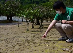 干潟の砂団子。「たくさんカニがすんでいる証拠」と平城さん=1日、奄美市住用町