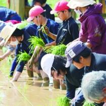 田植えをする地域住民と下平川小の児童ら=25日、知名町余多(提供写真)