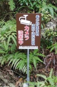 監視を啓発する看板=奄美大島(奄美大島自然保護協議会提供)