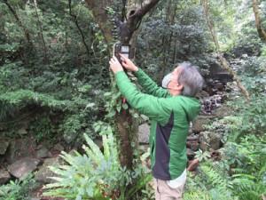 自動撮影カメラを点検する関係者=奄美大島(奄美大島自然保護協議会提供)