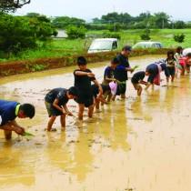 十五夜祭りの大綱製作用の苗を植える子どもたち(提供写真)