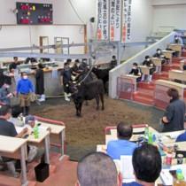 徳之島中央市場の5月競り=8日