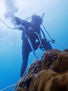 住用湾でサンゴを採取する研究グループのメンバー(提供写真)