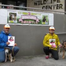 引退した探索犬のタワ(左)とユウキ(奄美野生生物保護センター提供)