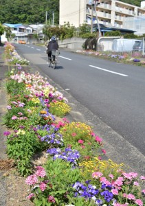地域を明るくする道路脇の花壇=4月30日、瀬戸内町古仁屋