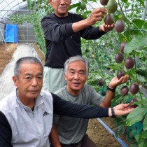 鮮やかな濃紫色に熟したパッションフルーツをPRする関係者=10日、瀬戸内町嘉鉄の有田農園