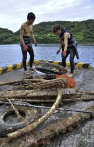 海中からごみを引き揚げるダイバー=12日、龍郷町久場