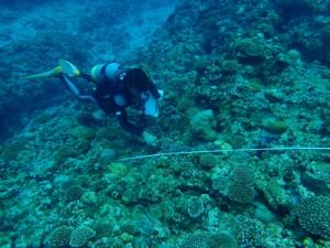 ダイビング事業者ら9人が参加したヨロン島リーフチェック=5月30日、与論島の茶花沖(海の再生ネットワークよろん提供)