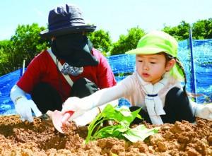 サツマイモの芋づるを植える園児ら=4日、和泊町