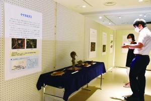 奄美大島のネズミを多様に紹介している企画展=23日、奄美市名瀬の奄美博物館