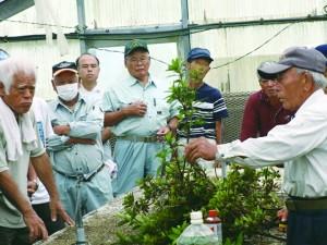 ケラマツツジの苗作りを学ぶ参加者ら=21日、和泊町(提供写真)