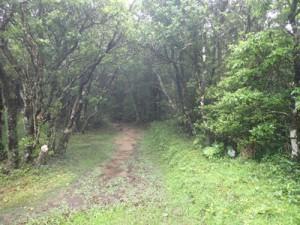 山頂へ続く登山道=23日、奄美大島の湯湾岳(環境省奄美群島国立公園管理事務所提供)
