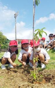 ヒカンザクラを植樹する亀徳小の1年生=5日、徳之島町亀徳