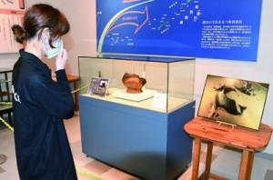 ウンブキの海底鍾乳洞内で発見され、一般公開が始まった7千年以上前の土器=29日、天城町天城